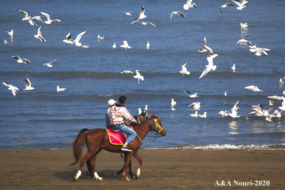 horse and birds story