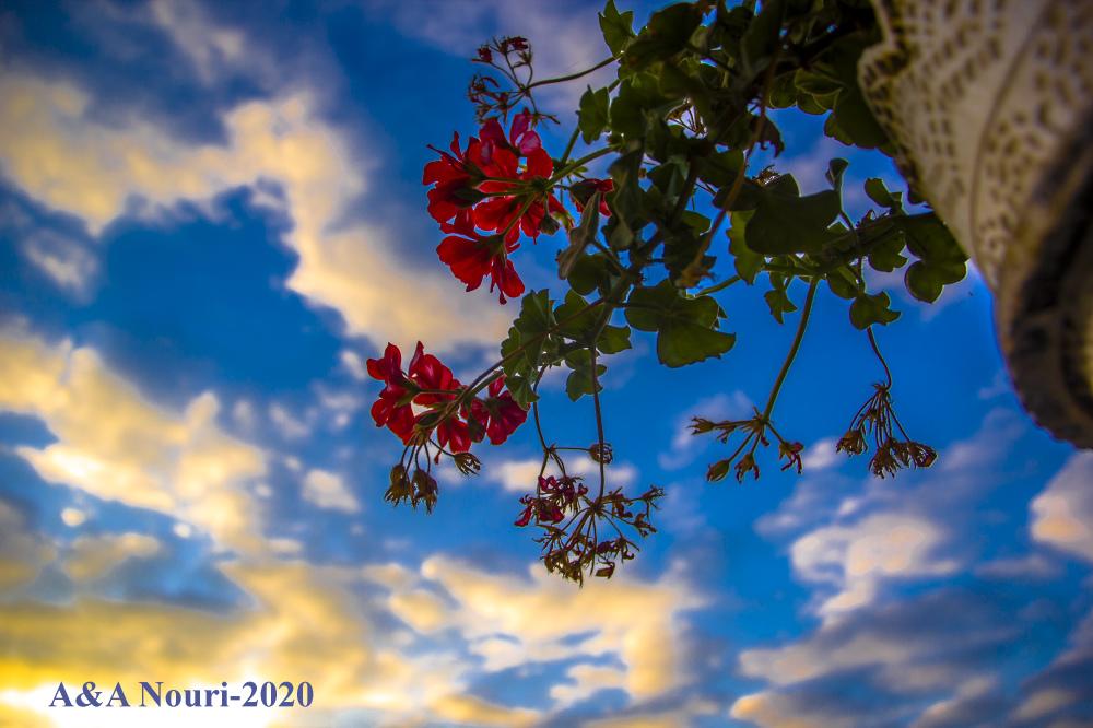 dream to the sky
