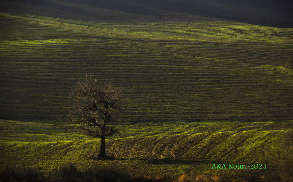 lonely tree in green