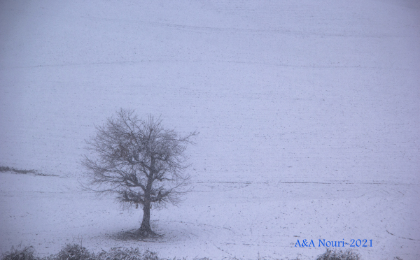 lonely tree in white