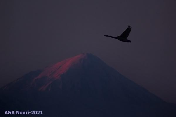 flight over damavand