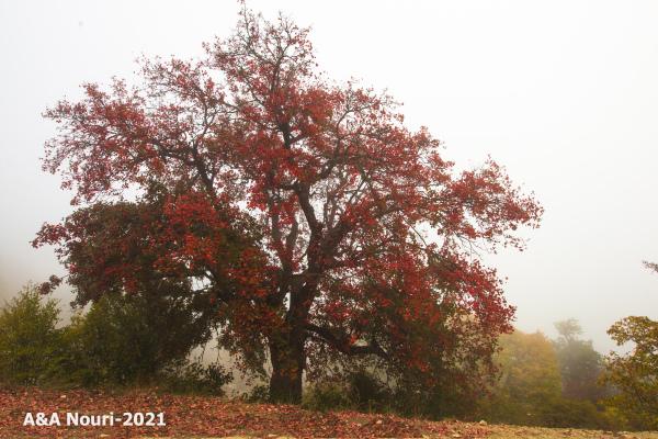 Autumn coming...