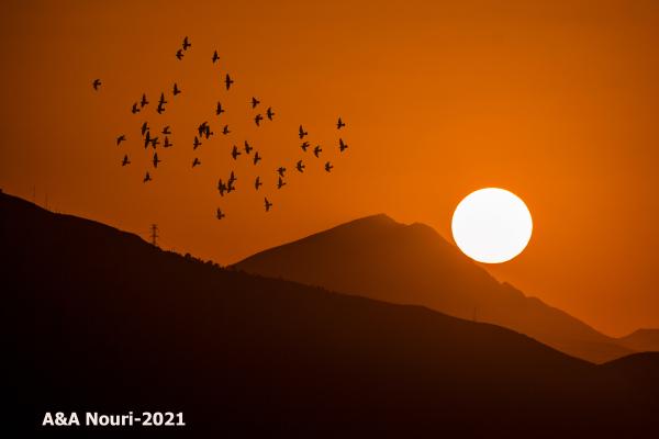 sunrise show
