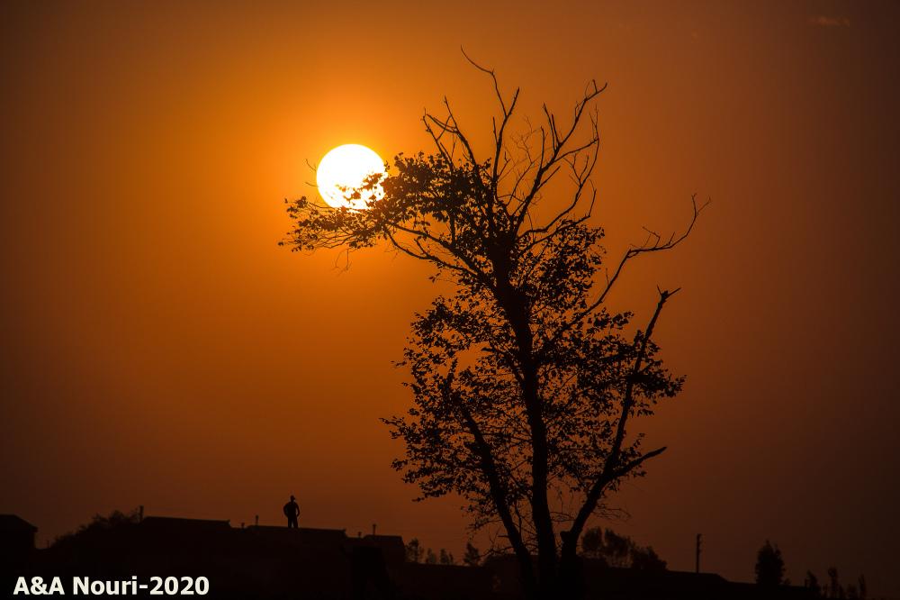 sun's nest