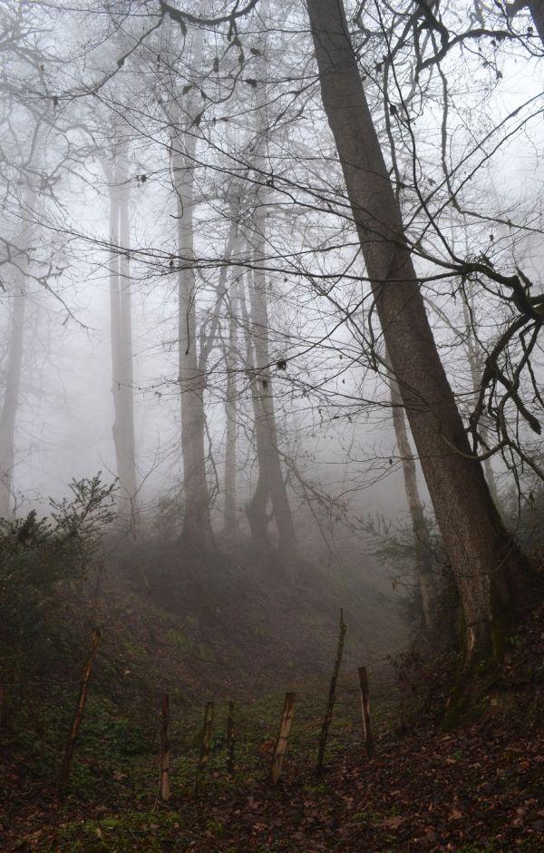 Lavizh forest