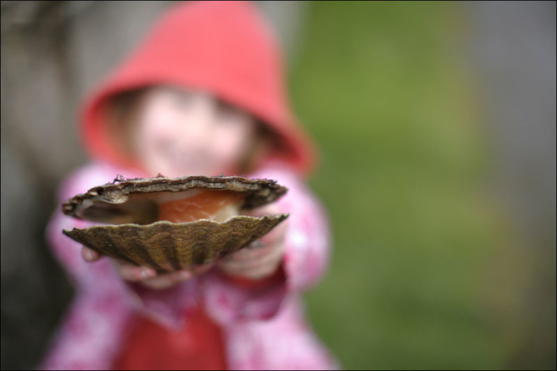 a child with a live scallop