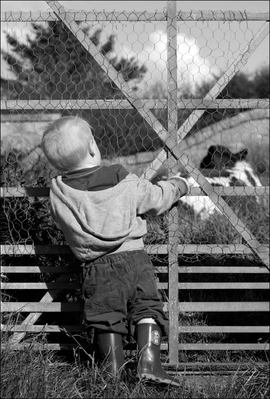 a child watches a cow in a field