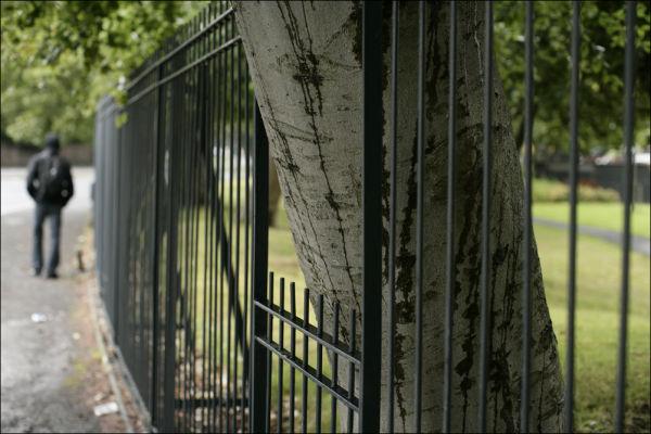 tree in railings sefton park livgerpool