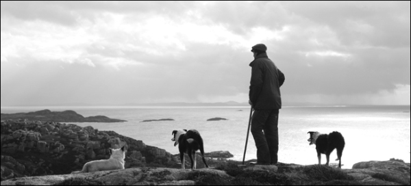 shepherd and dogs looking for stray sheep