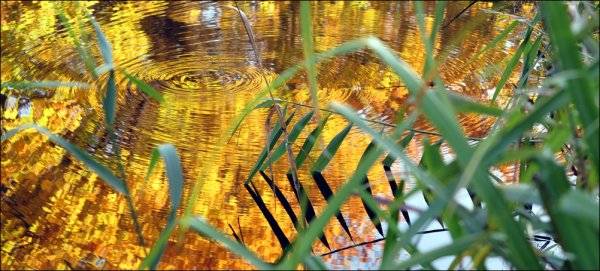 autumn colours on water