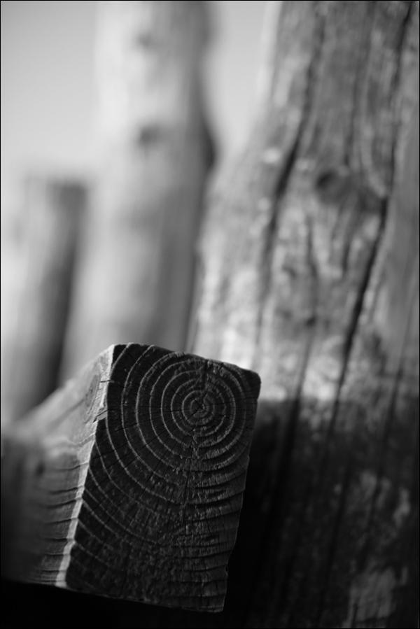 worn wooden pier