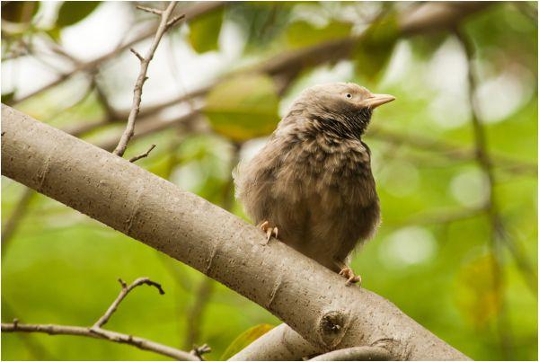Birdei