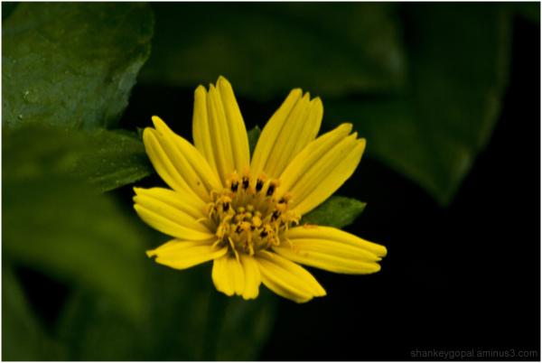 Yellow indeed