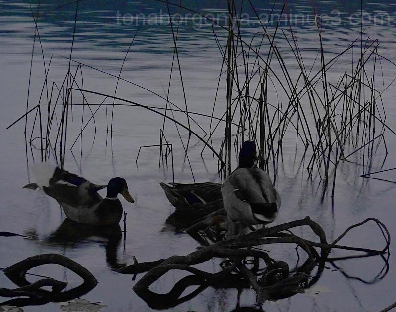rels al llac de Banyoles