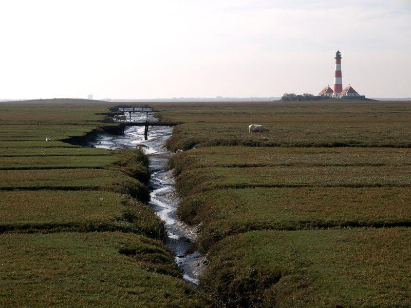 Lighthouse and Salt Marsh