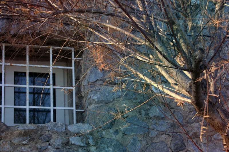 tree reflection in a window