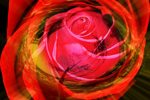 photomontage rose and tree