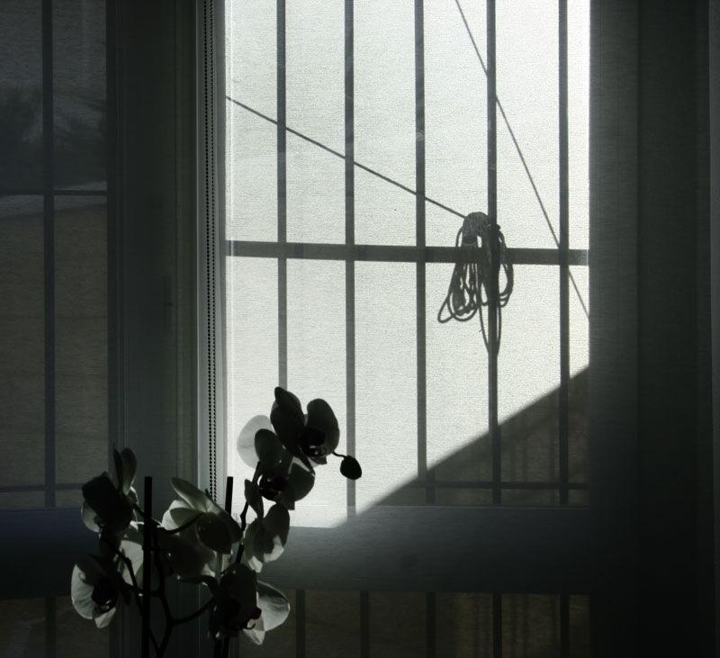 shadow on window
