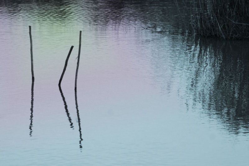 water pond reflection