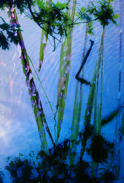 water plants reflection