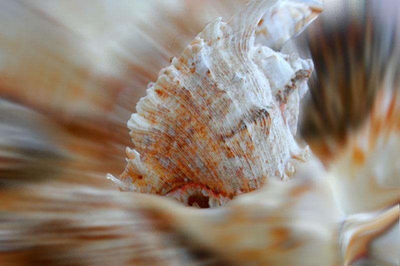 shells blur
