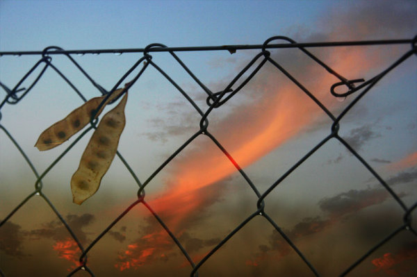 sunset behind wire netting