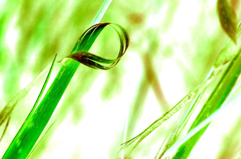 grass bow