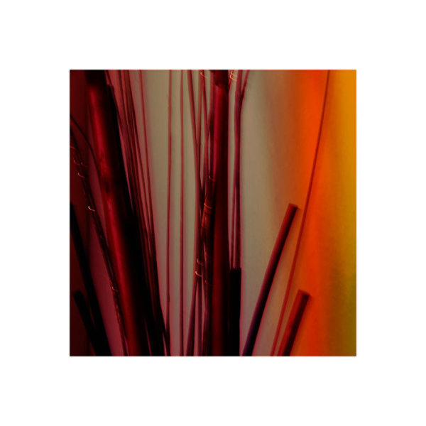 colourful abstract bamboo
