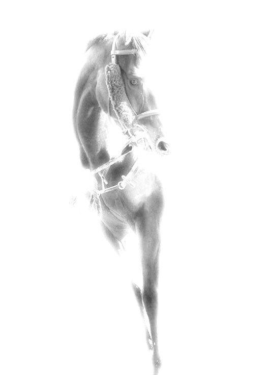 Horse black&white