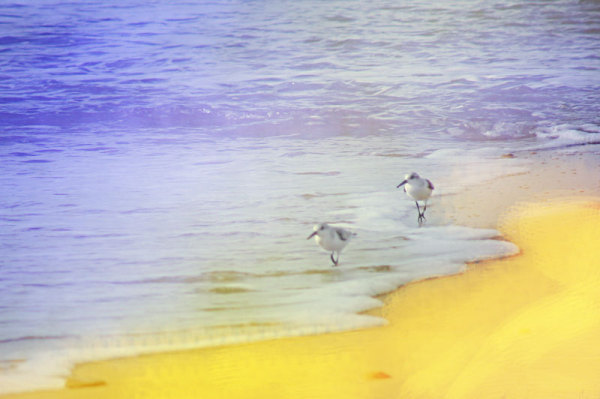 Birds at the seaside