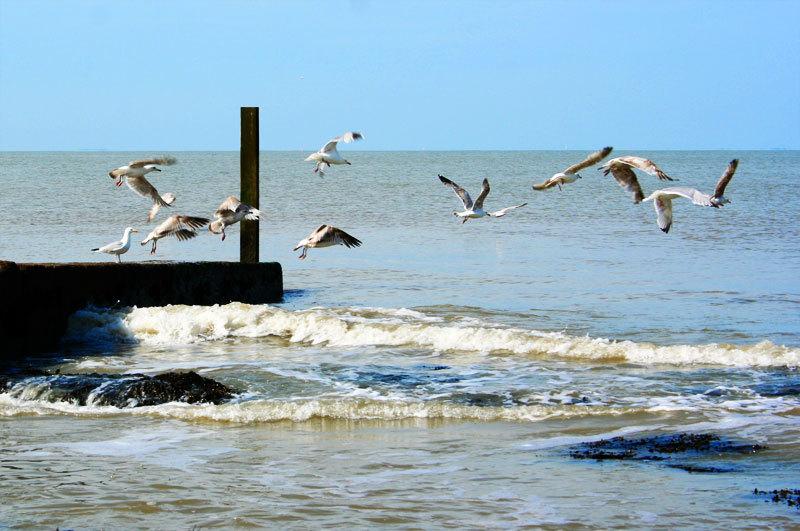 seagulls seaside