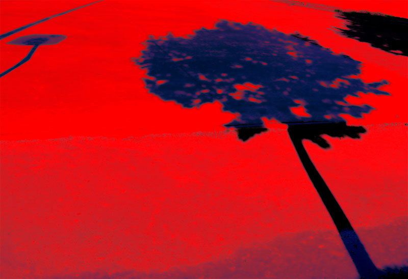 shadow of a tree red