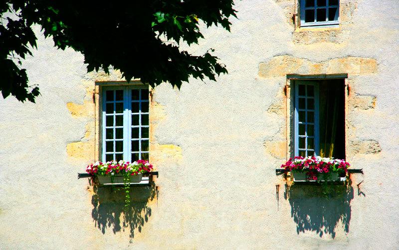 windows flowers and shadows