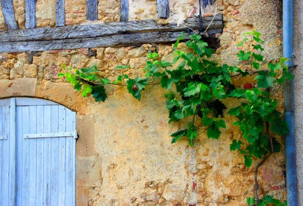 vine above door
