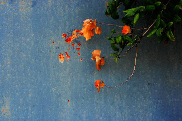 automne en bleu