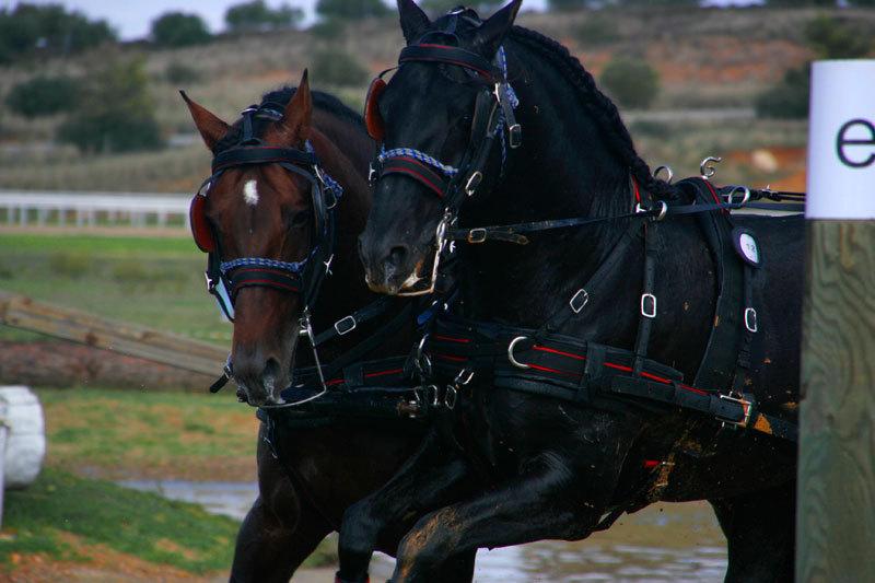 horse races dos hermanas
