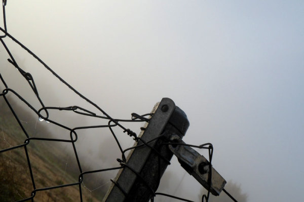 morning fog and wire netting