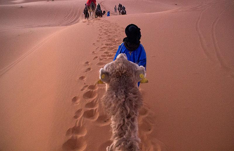 desert sand camels light
