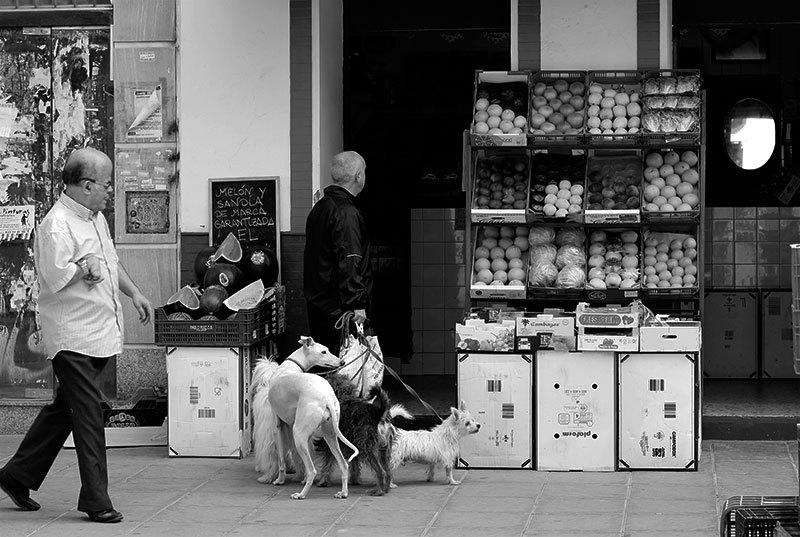 dogs' morning walk