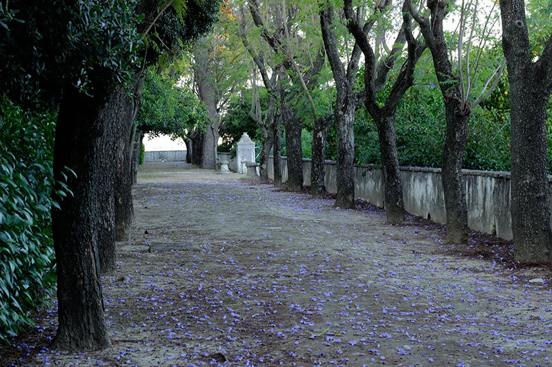 Le Forestier gardens at Castilleja de guzmán