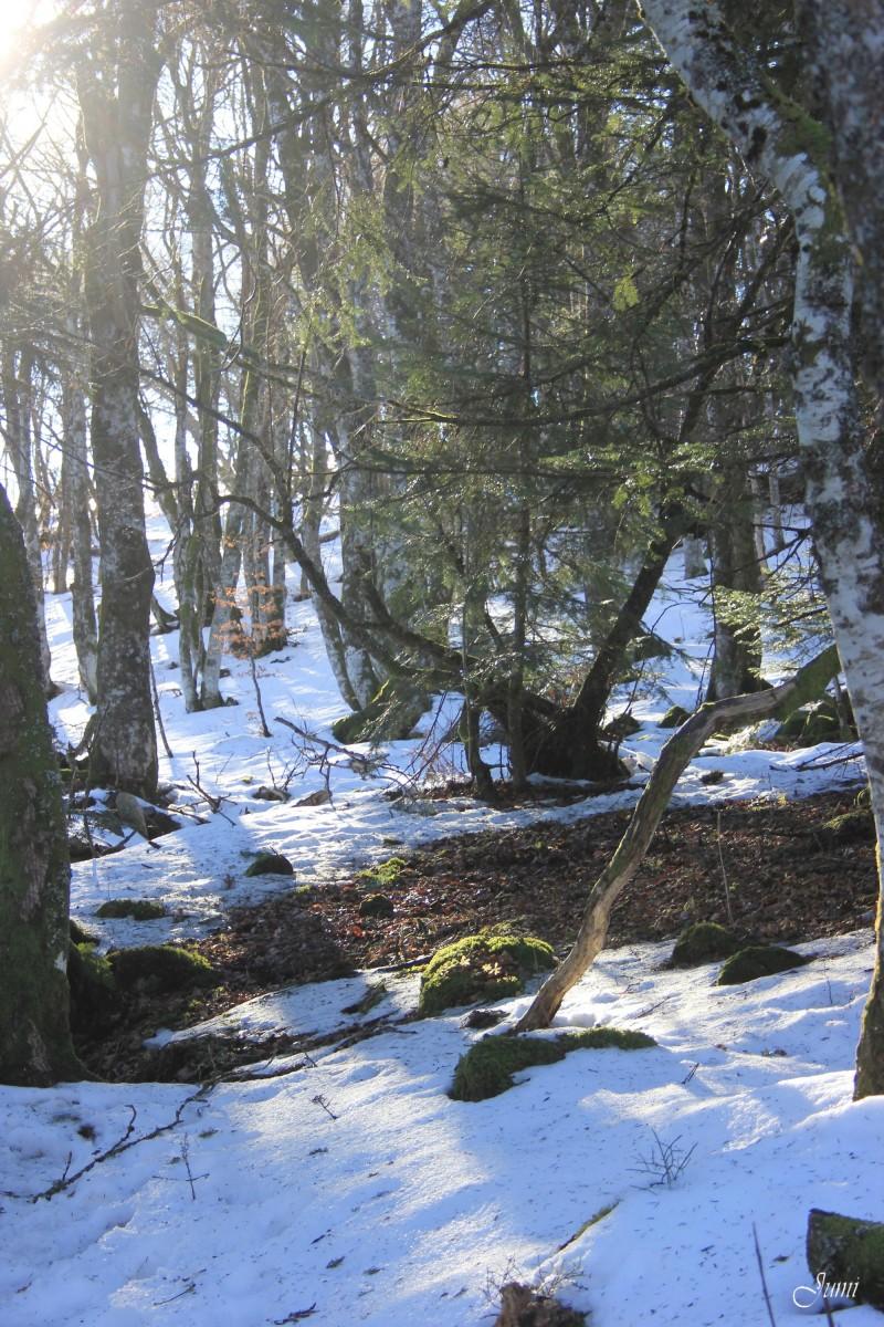 Forêt du Guéry