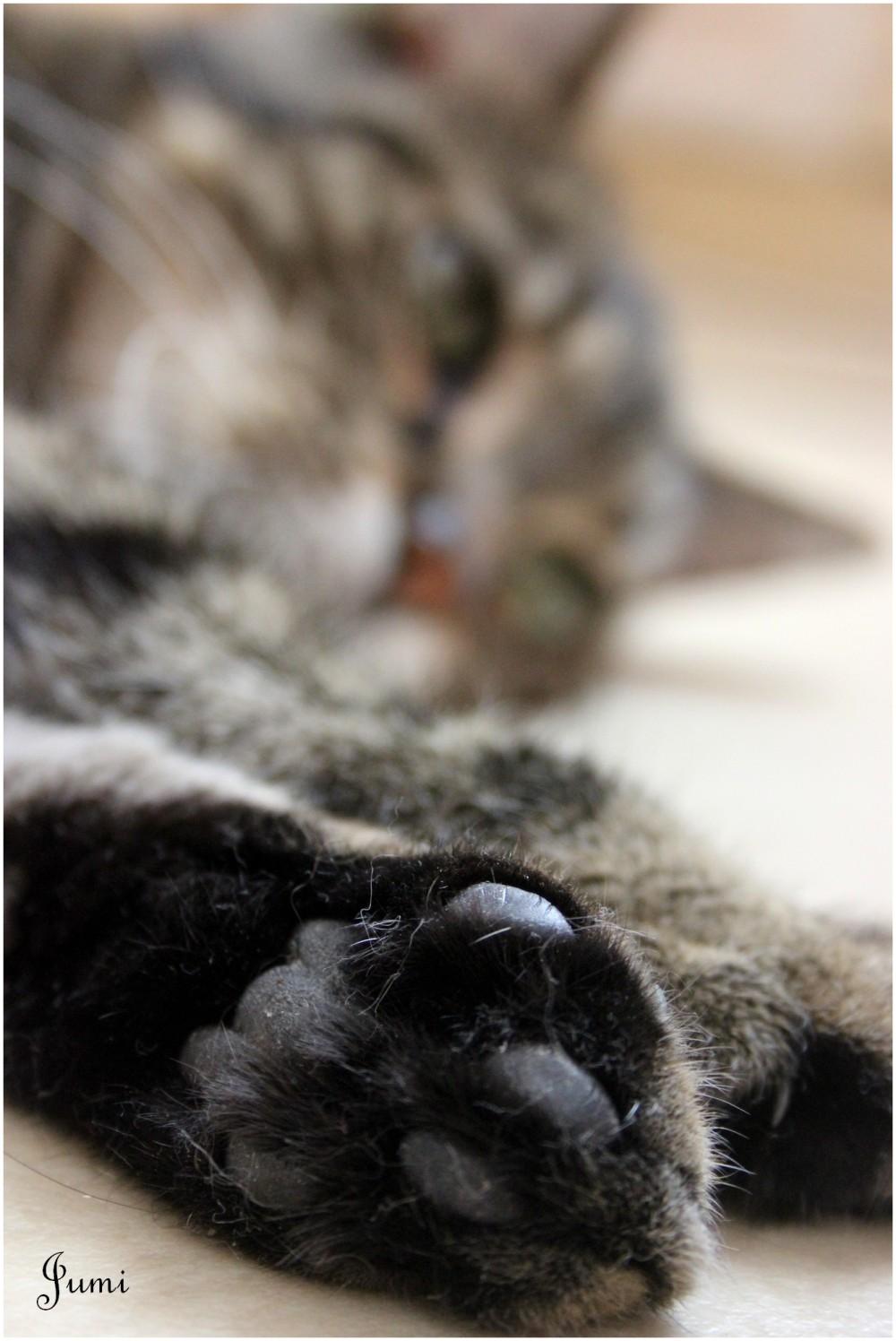 Cat's patte