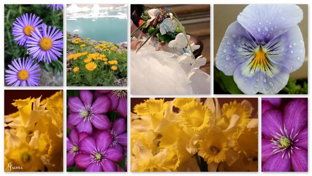 Fleurs de l'année 2013