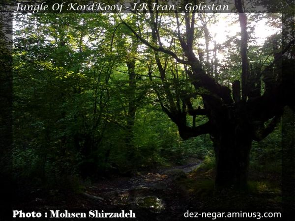 Jungle Of KordKooy - I.R Iran - Golestan