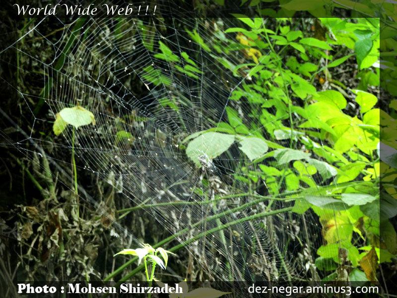 World Wide Web ! ! !