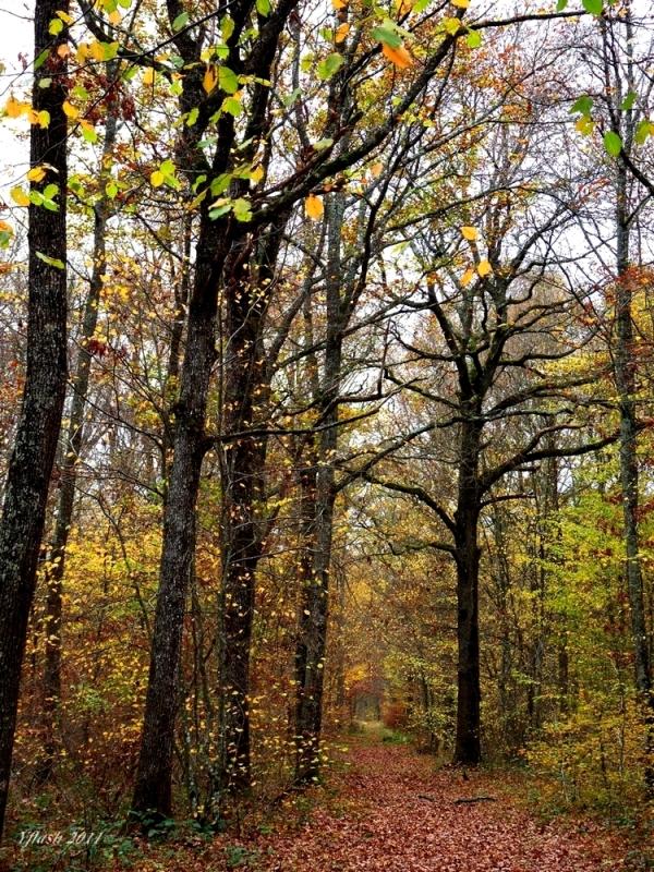 Bois et forêts.