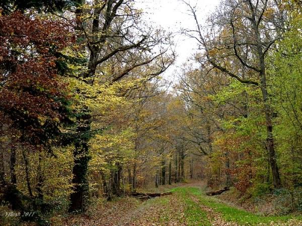 Bois et forêts 3