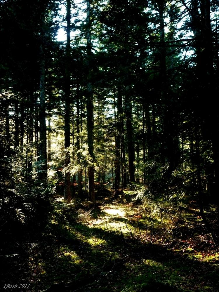 Bois et forêts 4