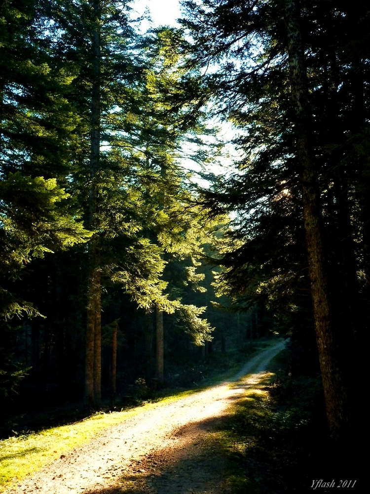 Bois et forêts 5