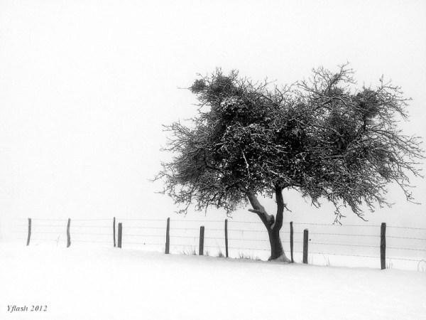 Dans le froid -2-
